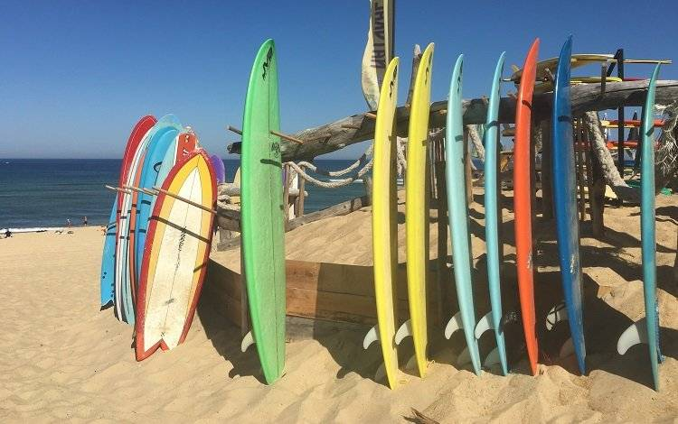 colored surfboards on the beach